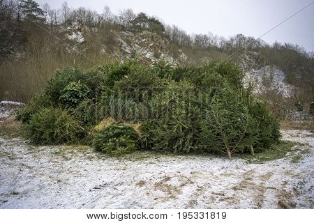 Collected Christmas tree in winter. Outdoor shot