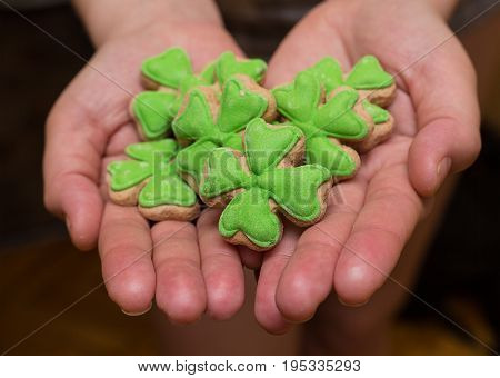 six delicious gingerbread sponge cakes covered with green mastic crochet pattern lie on the palms of a close-up. Celebrating St. Patrick's Day