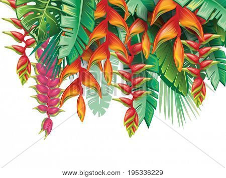 Tropical plants Heliconia and flowers on black. Raster version