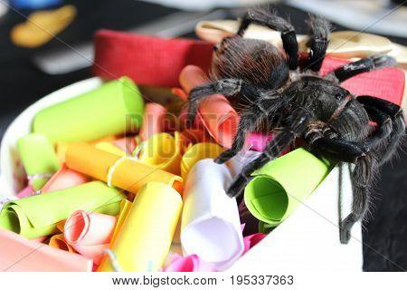 Tarantula On A Bright Background