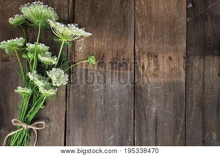 Queen Anne's Lace bouquet tied with string bow on rustic wood