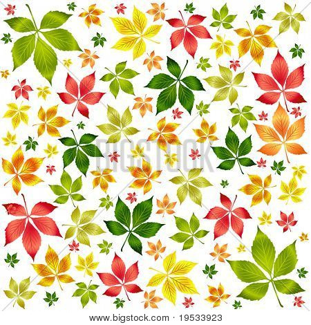 Set of vector colorful autumn leafs. Autumn background