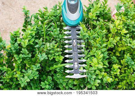Landscape design. Hand with scissors, cutting of bushes. Studio Photo