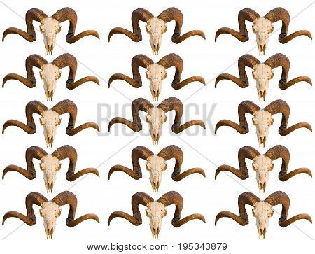 Pattern texture skull animal ram with curled horns several rows of images blank on white isolated background