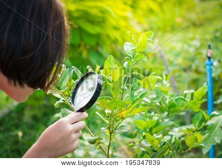 girl looking for insect in a garden