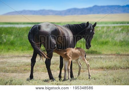 A young horse with a foal. Behind the mountains are visible.