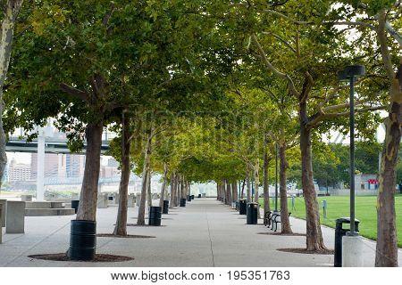 walk way with trees in Cincinnati park