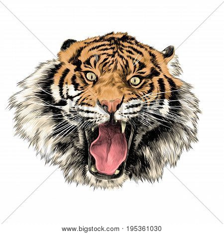 tiger face with open mouth sketch vector graphics color picture