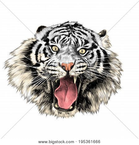white tiger face with open mouth sketch vector graphics color picture