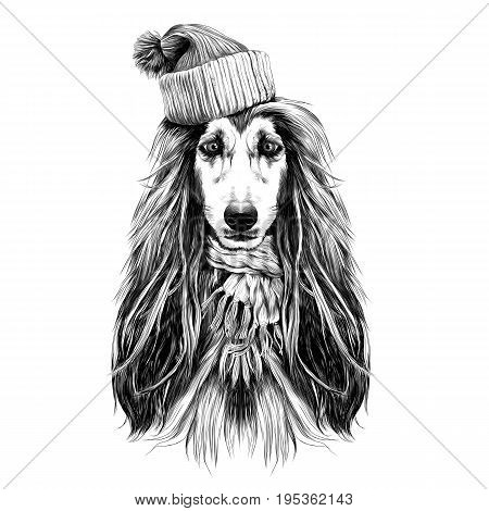 dog head full-face breed of Afghan hound in Santa hat and scarf sketch vector graphics black and white drawing