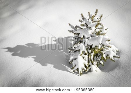 Small decorative tree in the snow closeup.