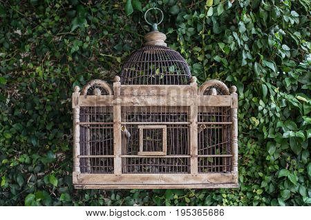 Vintage style birdcage on a green leaf wall