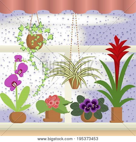 A window with Raindrops, curtains and flowers. Coloful cartoon vector illustration