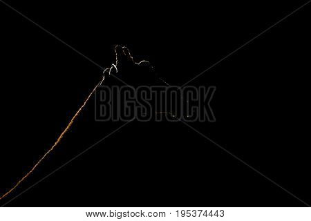 Close-up Of Silhouetted Giraffe Head And Neck