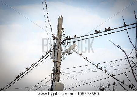 Many forest birds sit on electric wires against the blue sky.
