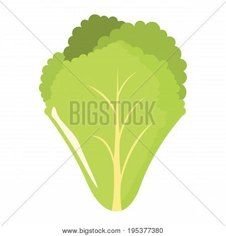Salad leaf icon in cartoon flat style isolated object vegetable organic eco bio product from the farm vector illustration. Salad object for vegetarian design