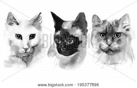 Hand drawn watercolor black cats shapes collection poster