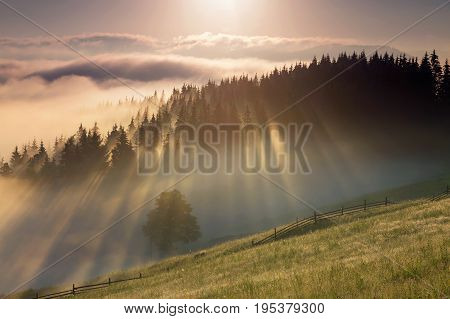 Summer sunrise at the forest edge, in Bucovina