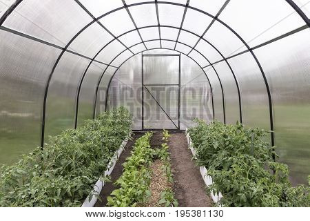 A small greenhouse with a metal frame covered with polycarbonate. Designed for growing vegetables.