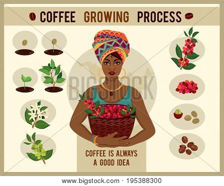 African woman is a coffee farmer with a basket of coffee berries on the coffee farm. Woman in traditional African clothes.  Process of planting and growing a coffee tree poster. Coffee growing process
