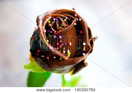 Rose soaked in chocolate sweets beauty real nature food