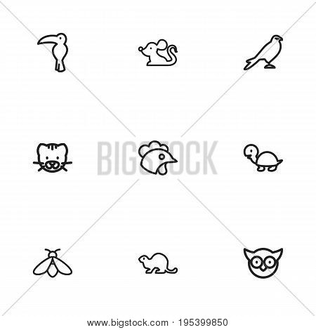 Set Of 9 Editable Animal Icons. Includes Symbols Such As Beaver, Rat, Cockerel And More. Can Be Used For Web, Mobile, UI And Infographic Design.