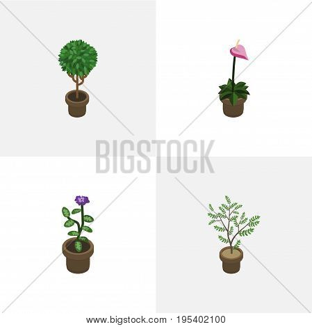 Isometric Plant Set Of Grower, Tree, Fern And Other Vector Objects. Also Includes Pot, Houseplant, Flower Elements.