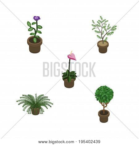Isometric Houseplant Set Of Flower, Grower, Plant And Other Vector Objects. Also Includes Pot, Fern, Plant Elements.