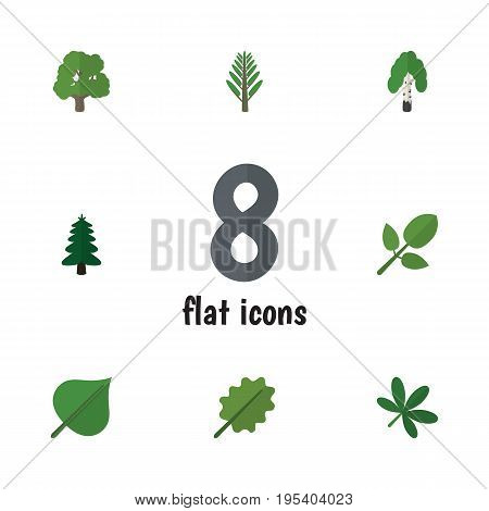 Flat Icon Ecology Set Of Decoration Tree, Hickory, Maple And Other Vector Objects. Also Includes Park, Alder, Jungle Elements.