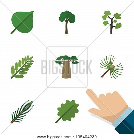 Flat Icon Natural Set Of Leaves, Spruce Leaves, Evergreen And Other Vector Objects. Also Includes Evergreen, Oak, Baobab Elements.