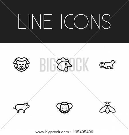Set Of 6 Editable Zoology Icons. Includes Symbols Such As Lion, Polecat, Pig And More. Can Be Used For Web, Mobile, UI And Infographic Design.