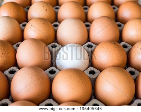 Close-up view of raw chicken. Every egg is a yellow egg with the exception of white duck eggs.The duck eggs shows prominently surrounded by chicken eggs.