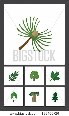 Flat Icon Natural Set Of Baobab, Acacia Leaf, Park And Other Vector Objects. Also Includes Birch, Wood, Forest Elements.
