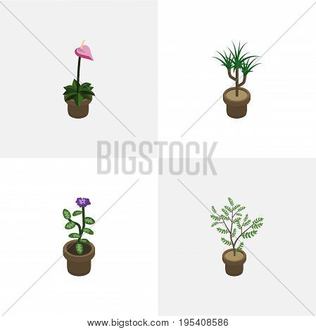 Isometric Flower Set Of Fern, Houseplant, Flower And Other Vector Objects. Also Includes Houseplant, Plant, Flower Elements.