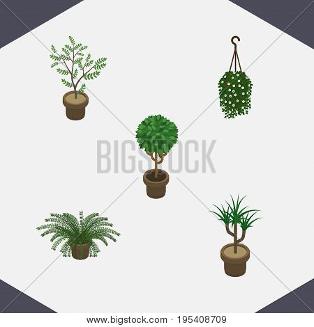 Isometric Plant Set Of Houseplant, Plant, Blossom And Other Vector Objects. Also Includes Botany, Houseplant, Flowerpot Elements.