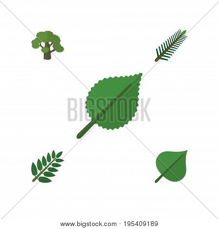 Flat Icon Natural Set Of Linden, Tree, Hickory And Other Vector Objects. Also Includes Spruce, Tree, Oak Elements.
