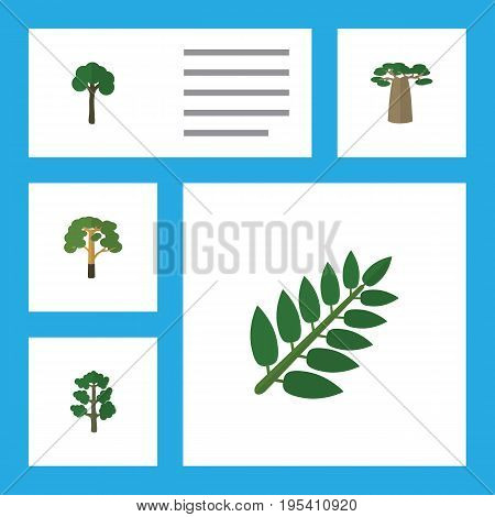 Flat Icon Ecology Set Of Evergreen, Acacia Leaf, Baobab And Other Vector Objects. Also Includes Wood, Leaves, Timber Elements.