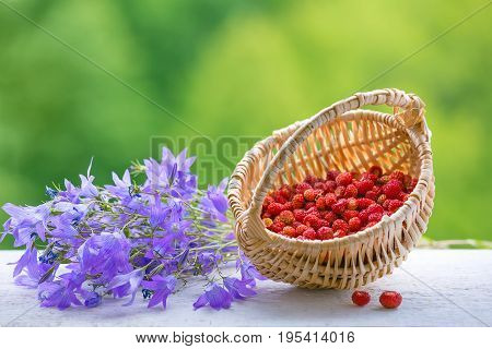 Wild strawberry in the basket, bells flowers on a green background. Summer colorful still life. Plenty of space for text.  illustration.