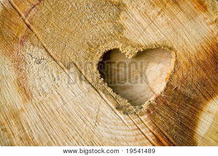 Cut log wood background texture.