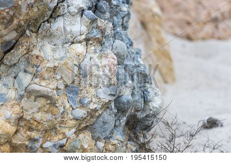 Puddingstone rock outcrop on New England beach