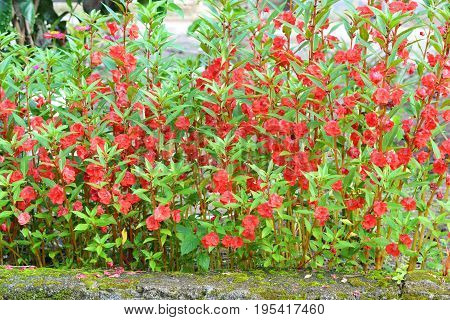 A beautiful collection of red flowers arranged neatly