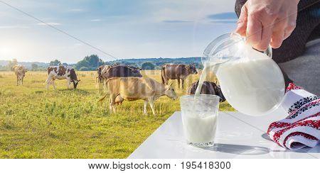 Milk Poured Into Glass .