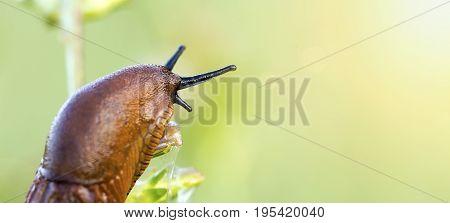 Website banner of a slug in the summer garden