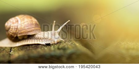 Website banner of a slow snail in summer