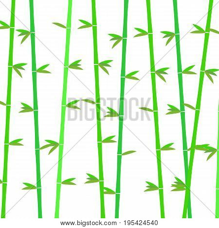 Bamboo background. Vector background with green bamboo stems. Tropical asian plant background. Decorative bamboo branches. Vector illustration.