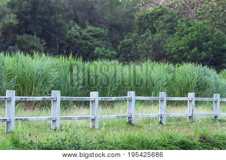 White fence around green jungle. Border demarcation