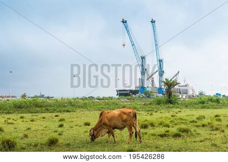 Coexistence between agriculture and industry.use for background