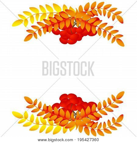 The branches of rowan berry clusters. Vector illustration for a site