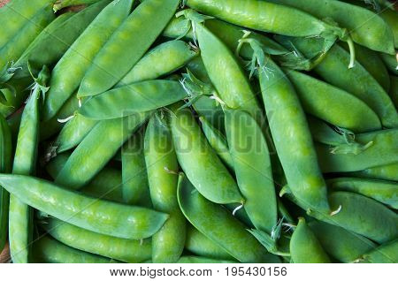 Fresh ripe and organic pea pod. Agricultural production.
