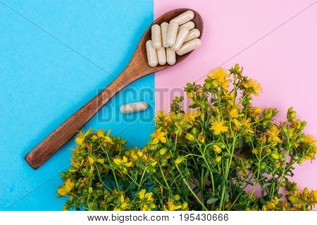 Medical capsules from natural St. John's wort medicinal. Studio Photo